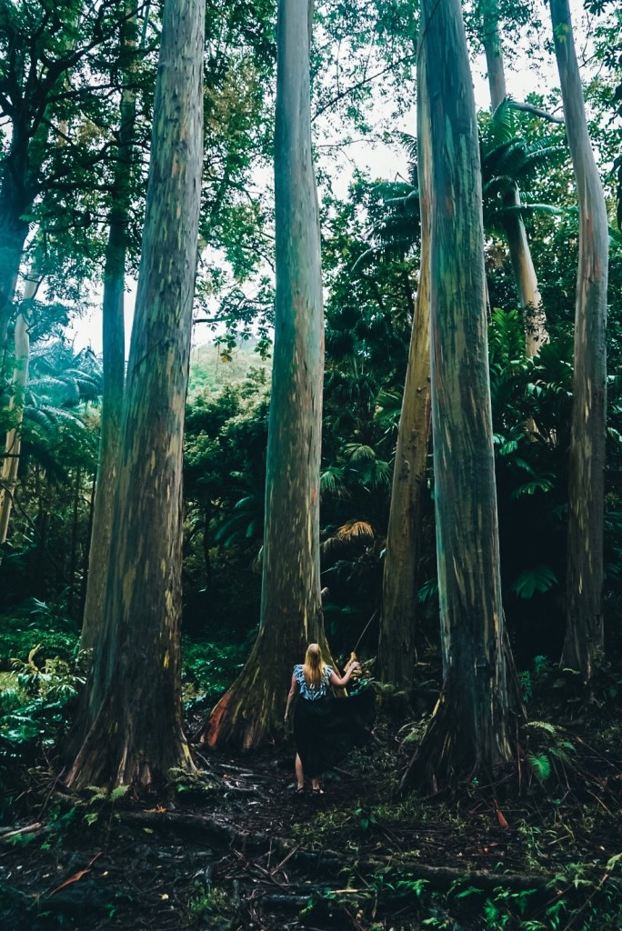 Woman standing in front of tall rainbow eucalyptus trees
