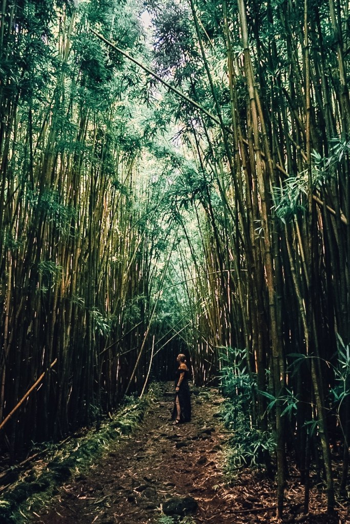 Woman standing amid the bamboo forest in a dress