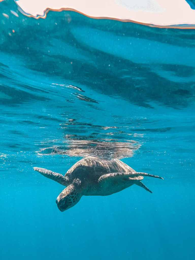 Turtle swimming near surface of water