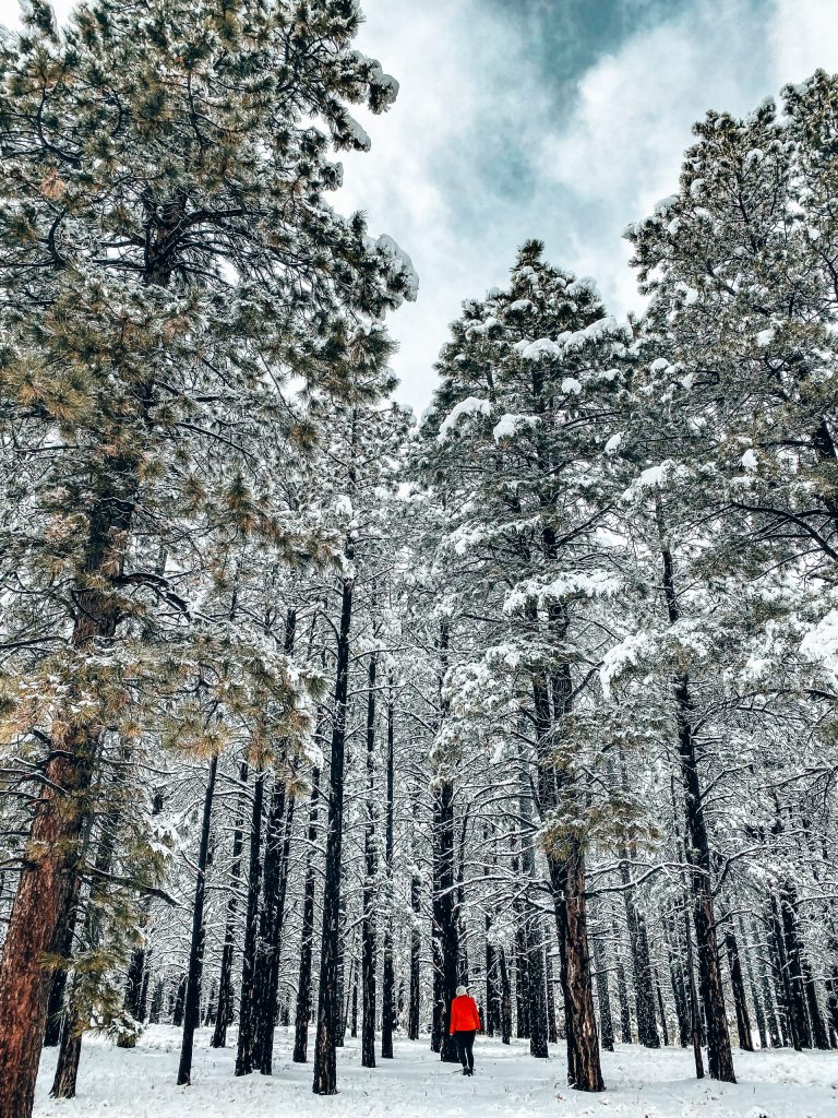 Woman in red coat standing in the snow among giant pine trees also covered in snow