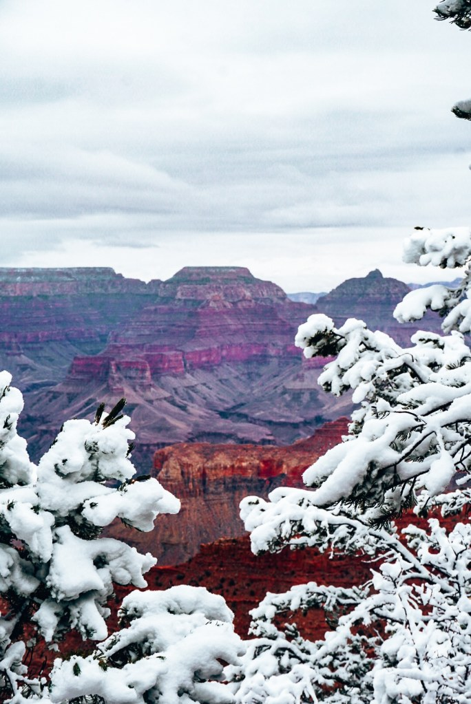 The Grand Canyon through snow covered branches