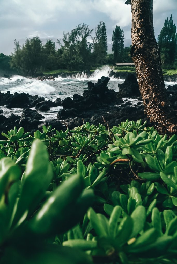 Up close of some plants that are growing from the black lava rock on the coastline with the water crashing in the background