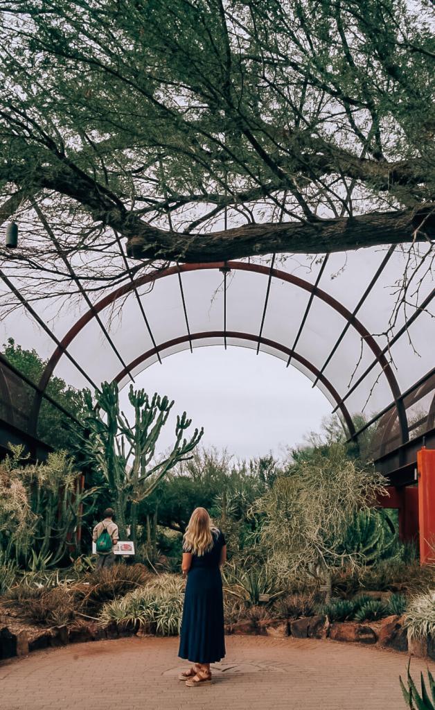 Woman standing under tall trees at Desert Botanical Gardens