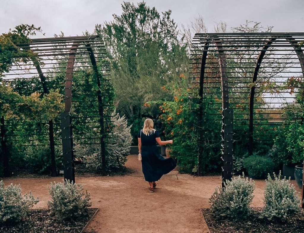 Woman standing amid plants at Desert Botanical Gardens