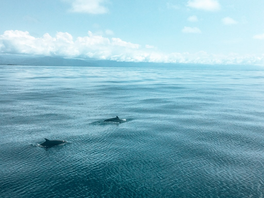 2 dolphins halfway out of the water