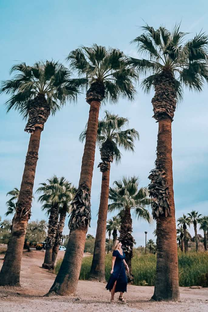 Woman standing amid palm trees at Papago Park