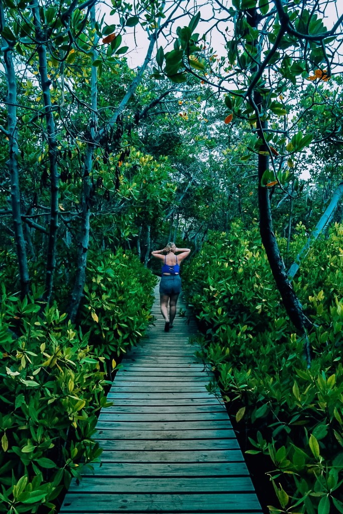 Woman walking through the mangroves on the bioluminescent bay Puerto Rico tour at sunset