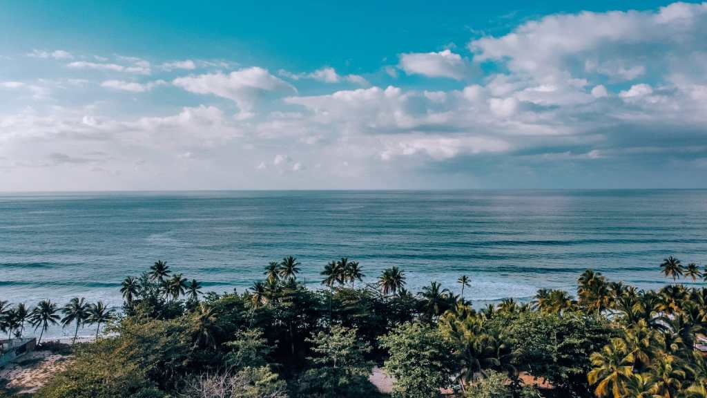 Pic of the palm trees running up to the beach in Puerto Rico from above