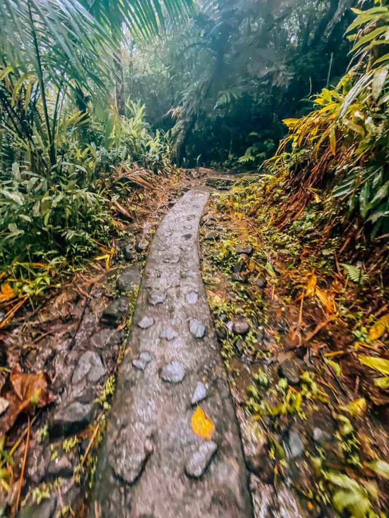 Mount Britton Tower Trail hiking trail in El Yunque