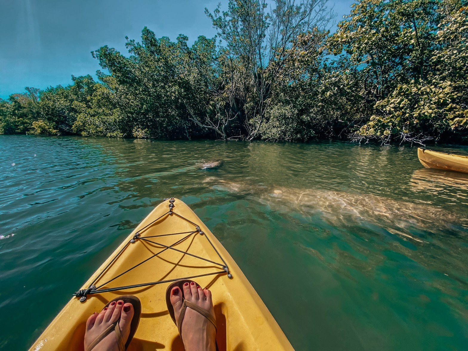 Woman sitting in kayak while two manatees swim by her