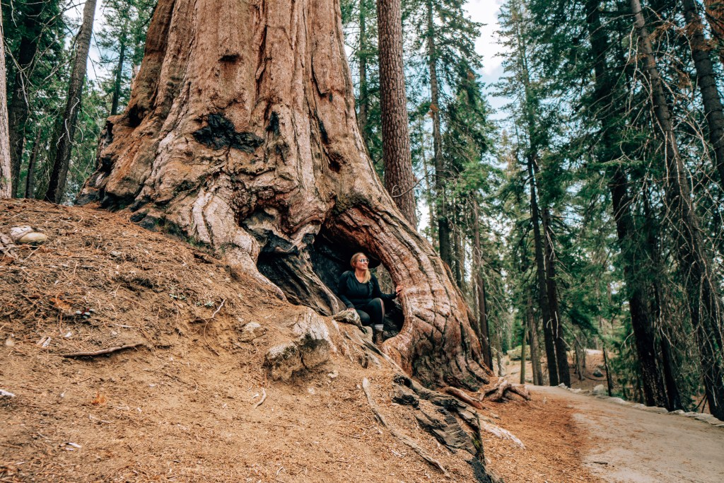 Woman sitting inside the root system of a large sequoia tree in Sequoia National Park