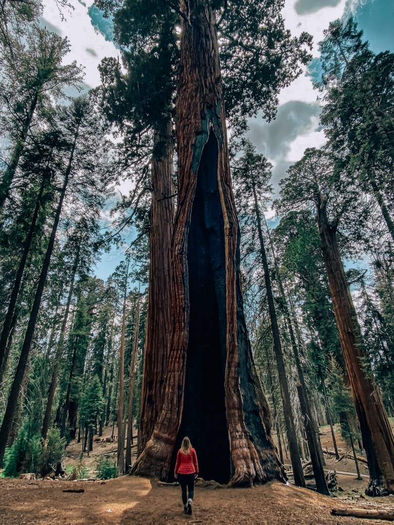 Woman standing in front of a large sequoia tree in Sequoia National Park