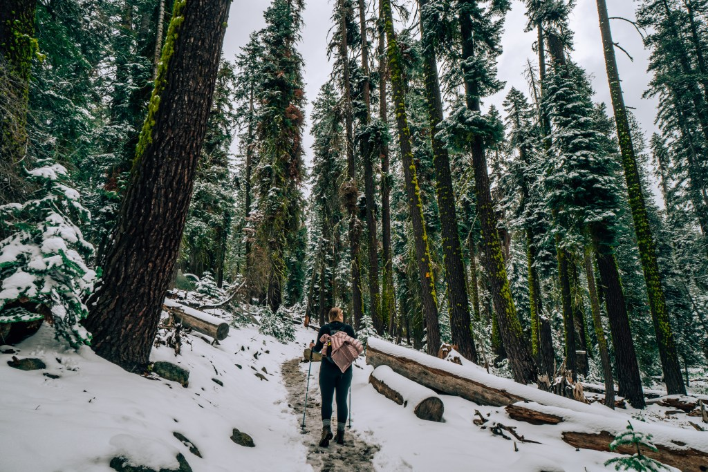 Woman hiking through a snowy trail with large moss and snow-covered redwood trees all around