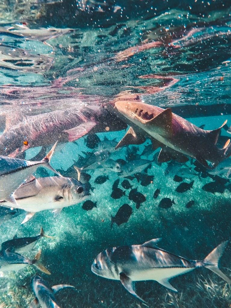 Underwater shot of fish and nurse sharks